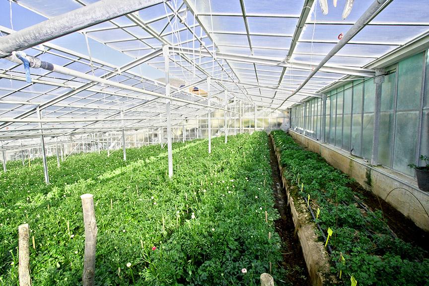 Green House Misting Systems Dubai Abu Dhabi Uae